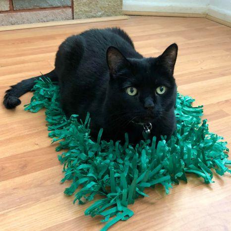 black cat on paper grass mat